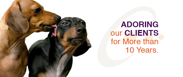 adoring our clients for more than 10 years